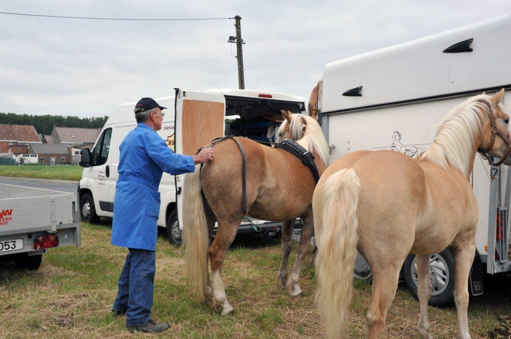 Paardenrally 11