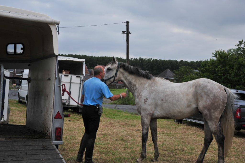Paardenrally 117