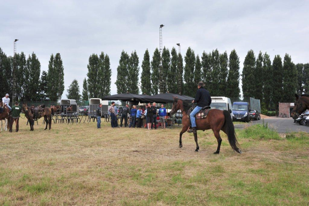 Paardenrally 123