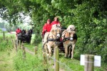 Paardenrally 139