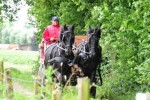 Paardenrally 140