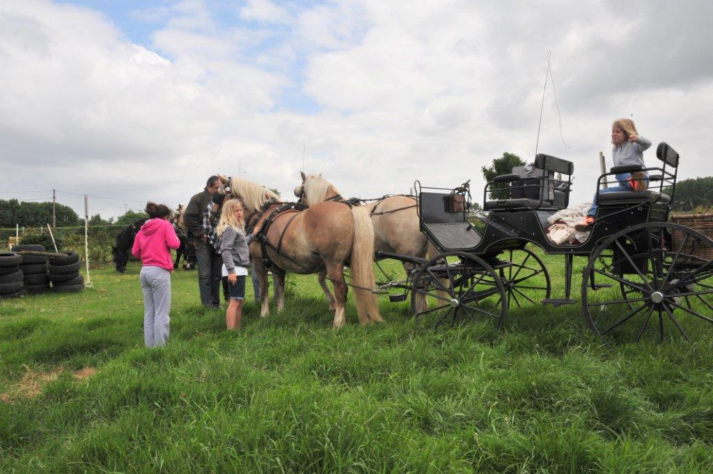 Paardenrally 151