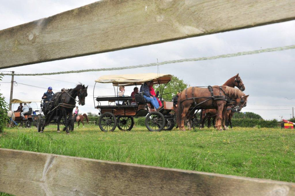 Paardenrally 166
