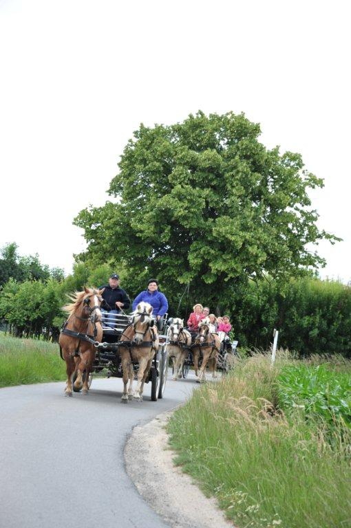 Paardenrally 170