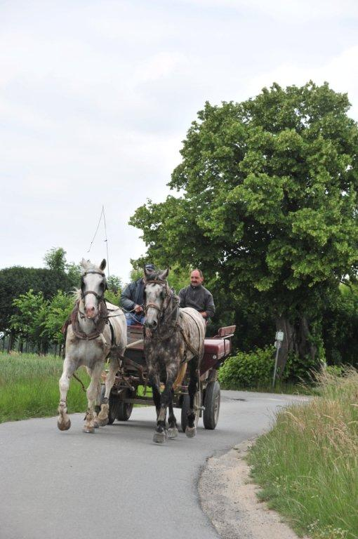 Paardenrally 172