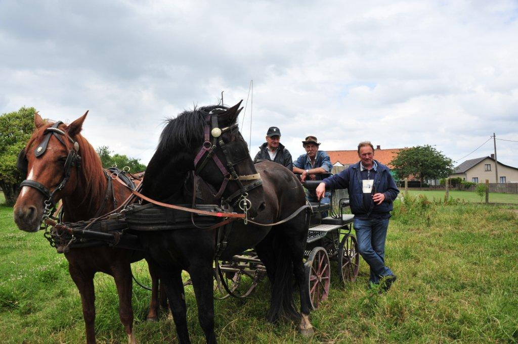 Paardenrally 208