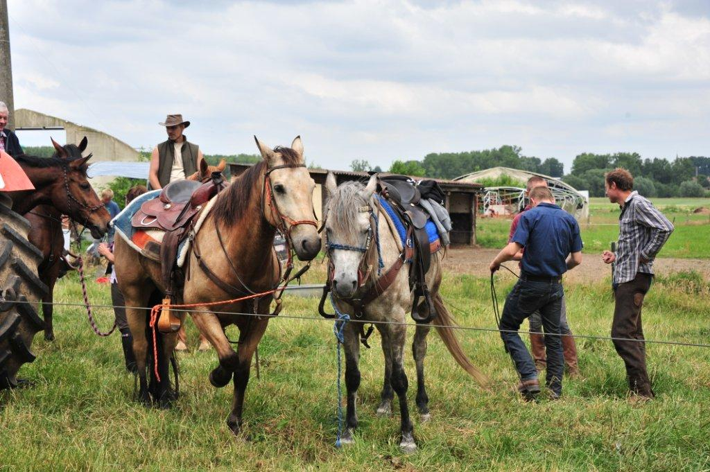 Paardenrally 212