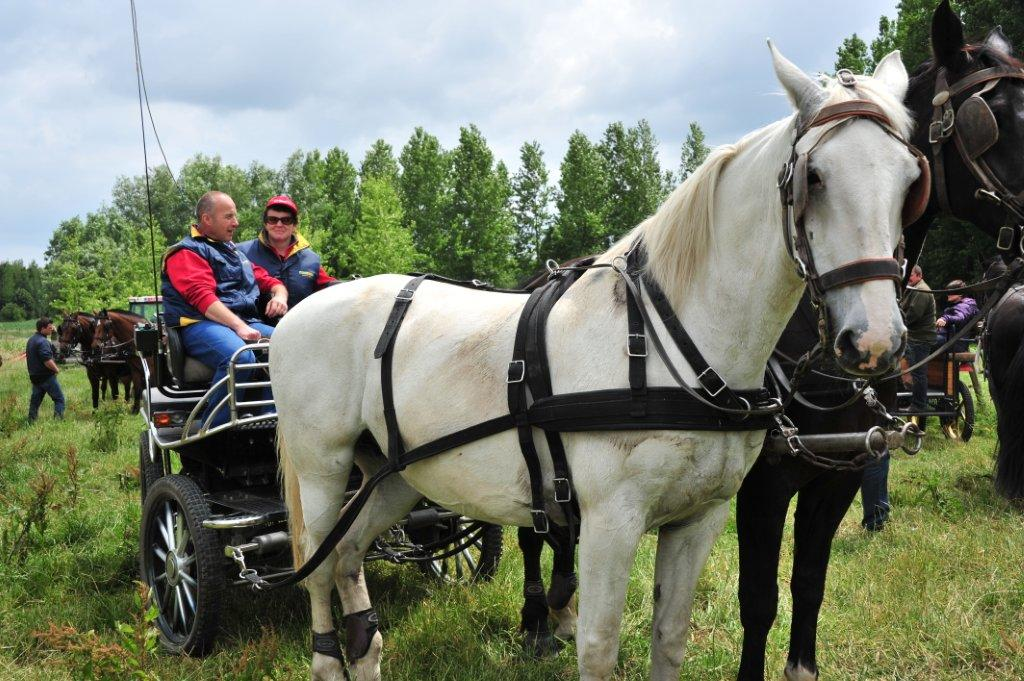 Paardenrally 215