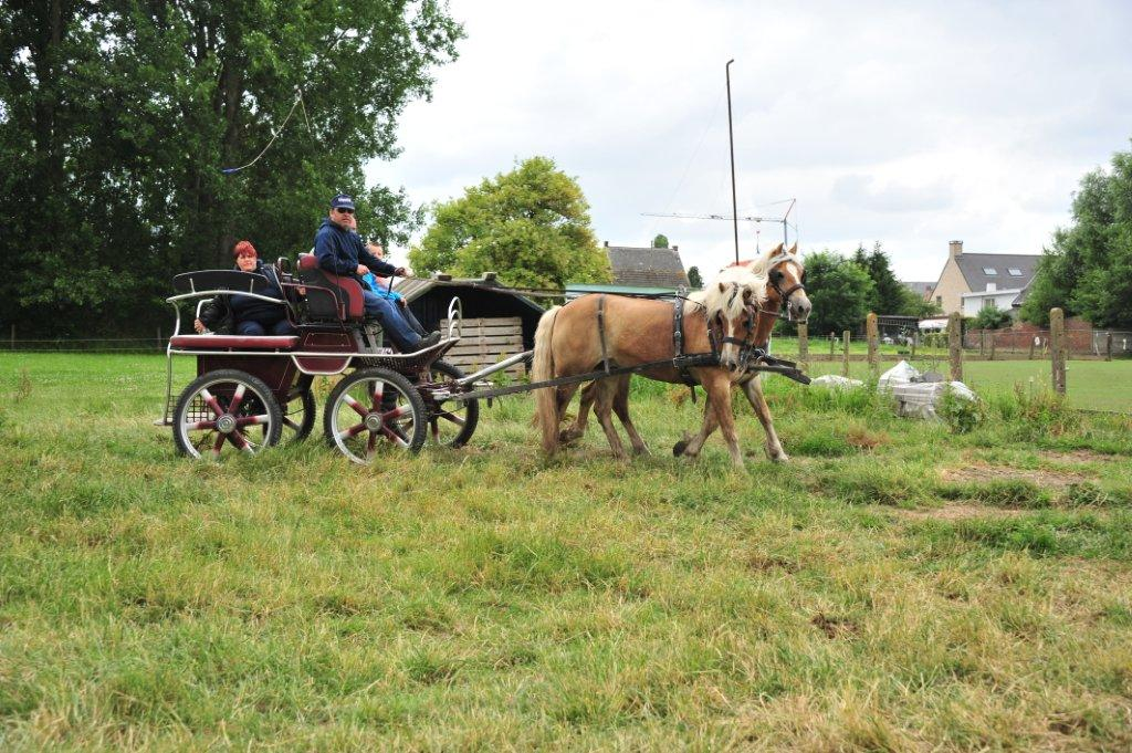 Paardenrally 223