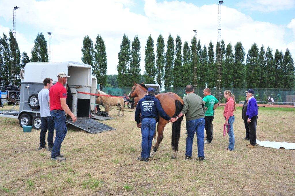 Paardenrally 244