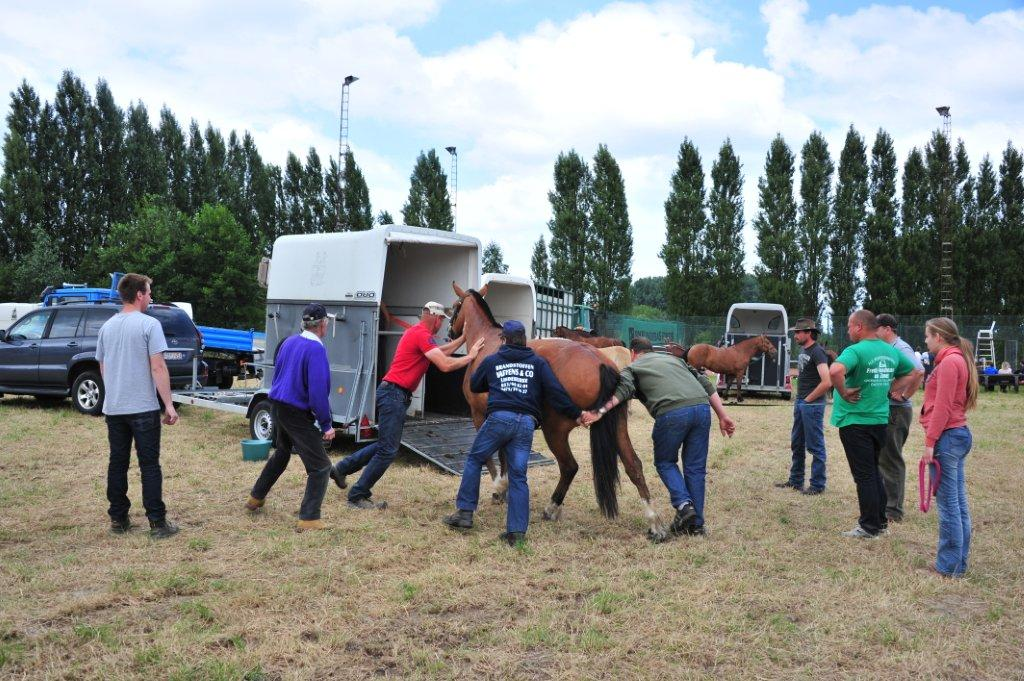 Paardenrally 245