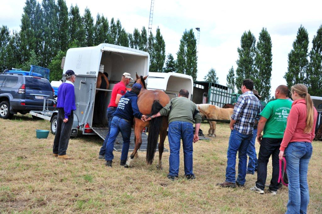 Paardenrally 246