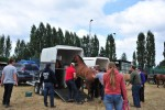Paardenrally 247