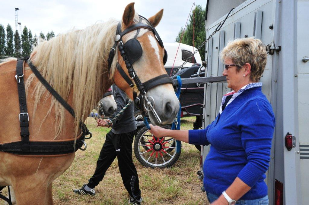 Paardenrally 26