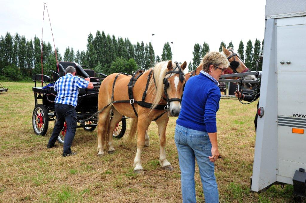 Paardenrally 29