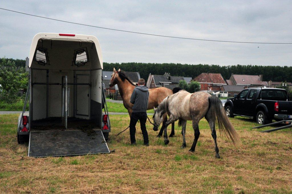 Paardenrally 37