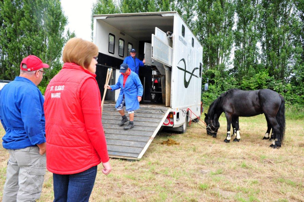 Paardenrally 48